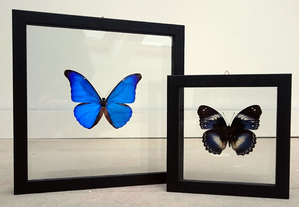 Butterflies in double paned glass
