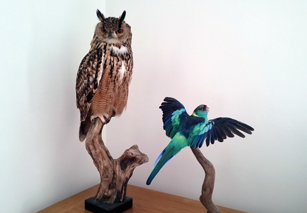 Taxidermy as an ornament